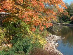 Photo-Thornapple River